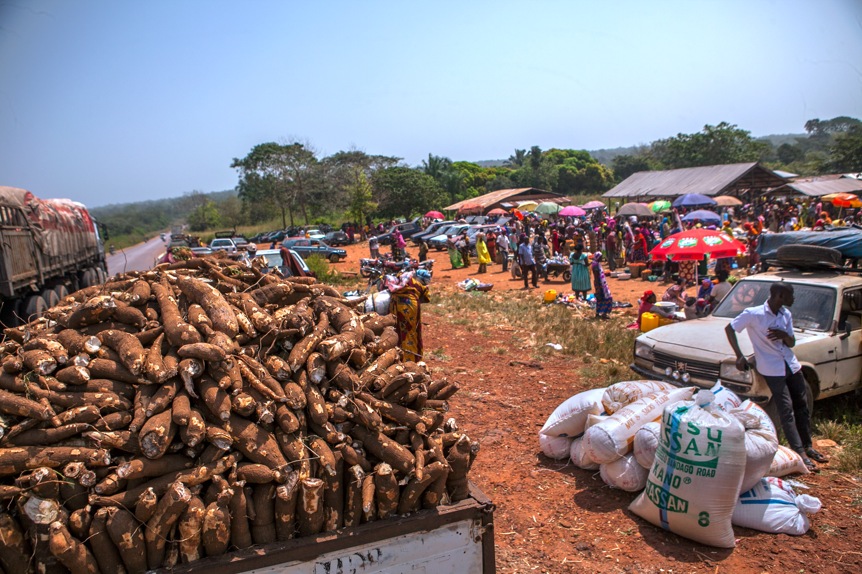 Newly harvested cassava tubers await shipment to processing in Kogi state.