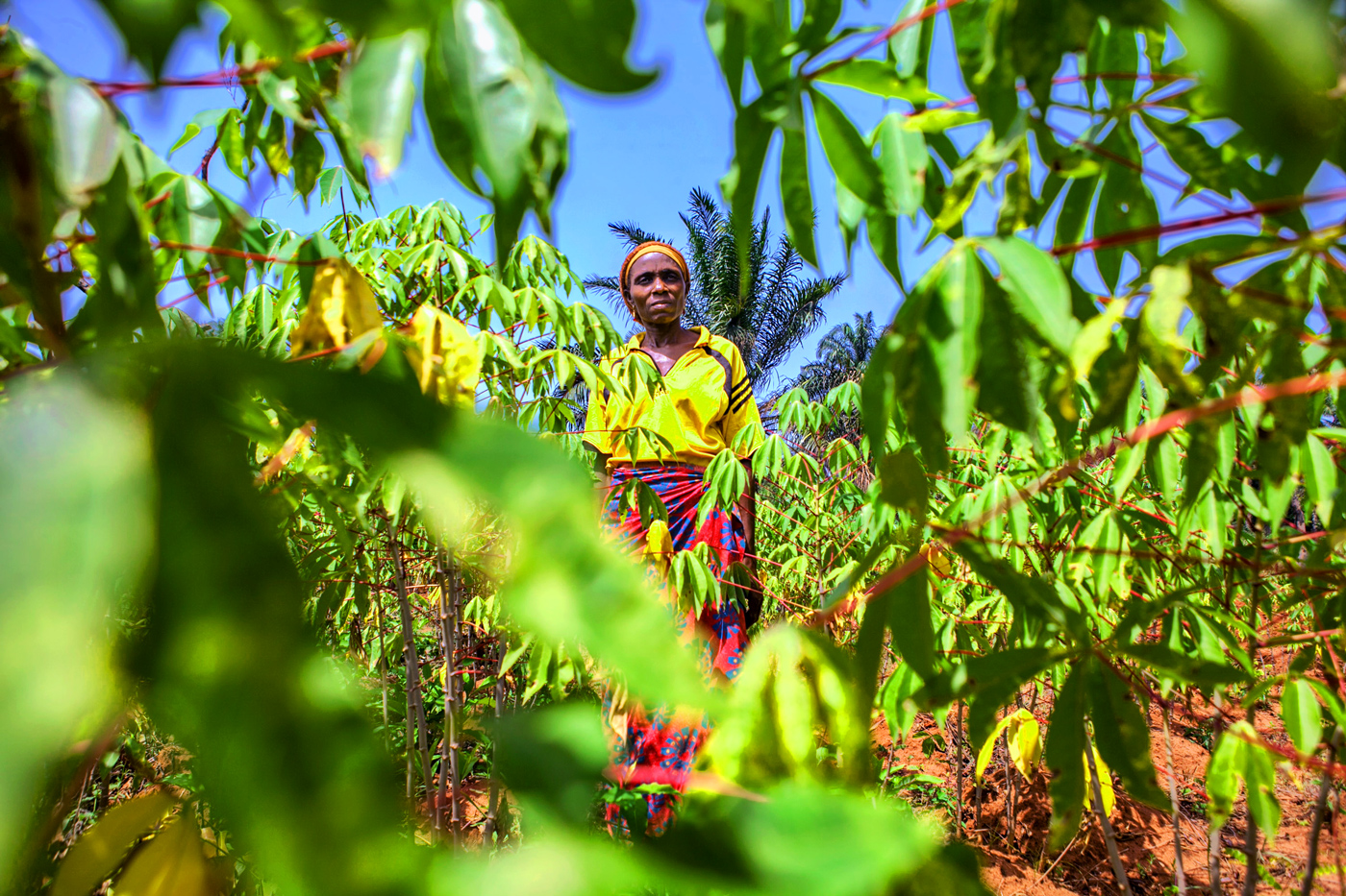 Woman farmer standing in her fields in Kogi state.