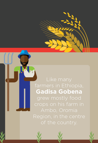 Infographic about clusters work with barley in Ethiopia