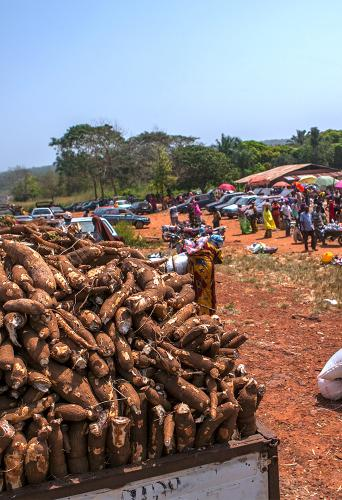 Marketplace with piles of cassava in Nigeria